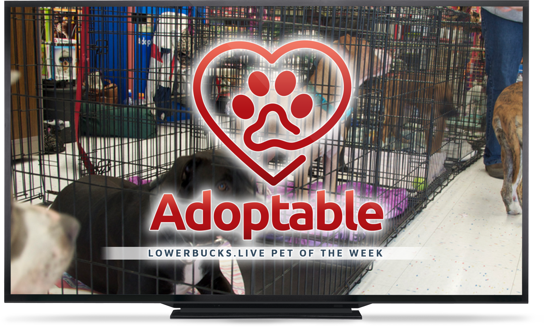 Watch the Adoptable Pet of the Week